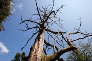 Eugene Tree Care