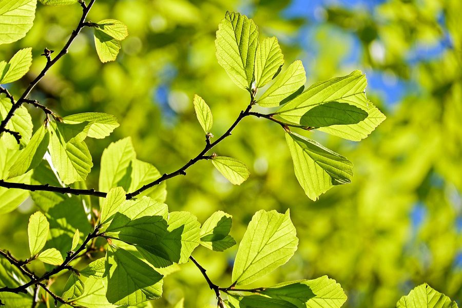 Summer Salem Tree Care Tips