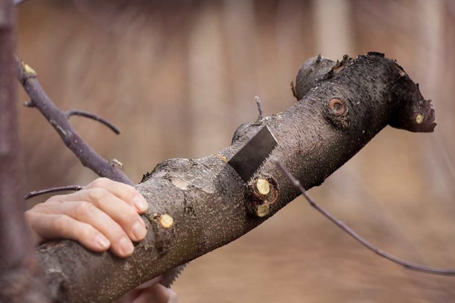 Certified Arborist Tips: Why You Should Never Attempt To Remove A Tree On Your Own