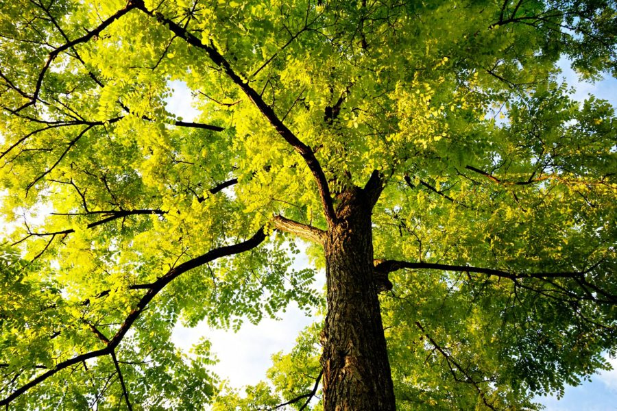 Common Tree Care Questions Answered By A Certified Arborist