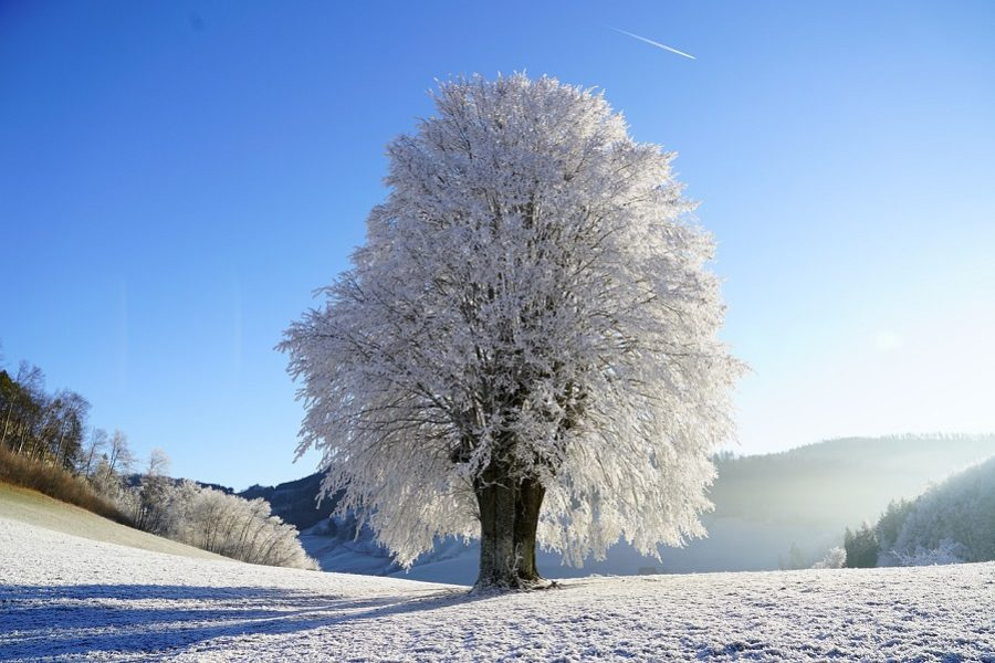 Westcoast Tree Care: Protecting Your Trees From Winter Storms