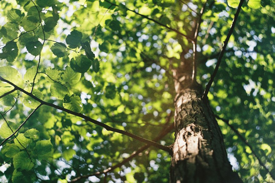What To Expect From A Professional Tree Care Consultation