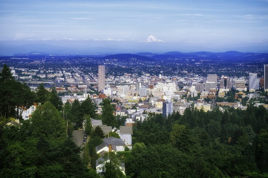 A Guide To The Best Portland Tree Care Practices