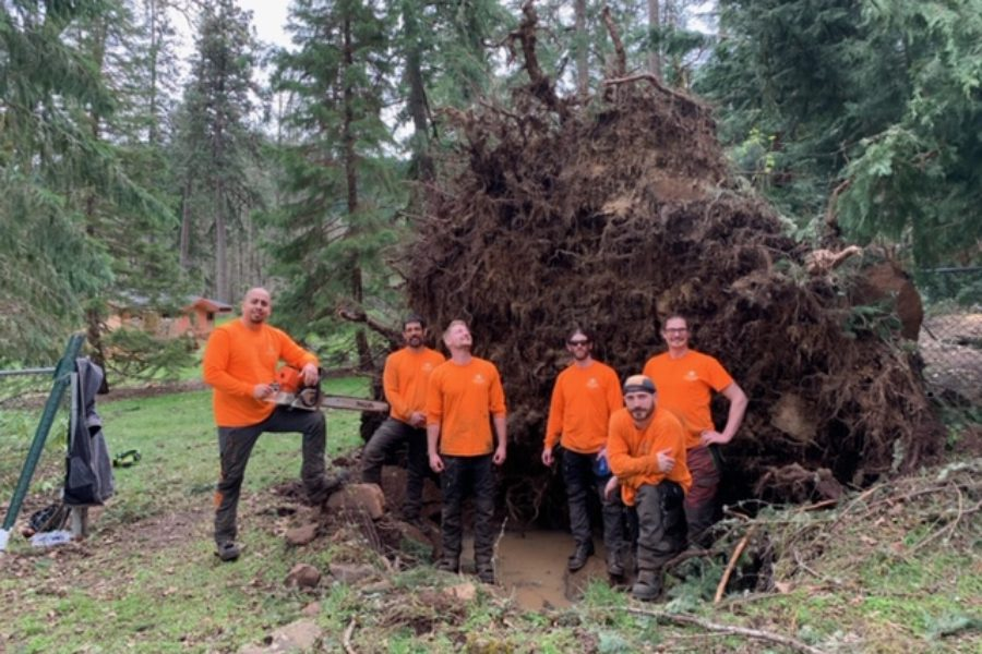 Corvallis Tree Care: Pine & Fir Tree Failure