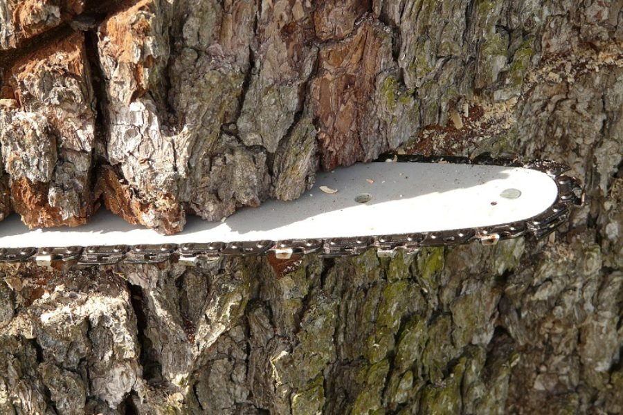 Why You Need A Certified Arborist For Your Salem Tree Removal Project