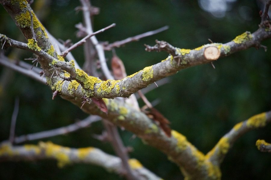 Salem Tree Pruning: 5 Signs Your Tree Needs Trimmed
