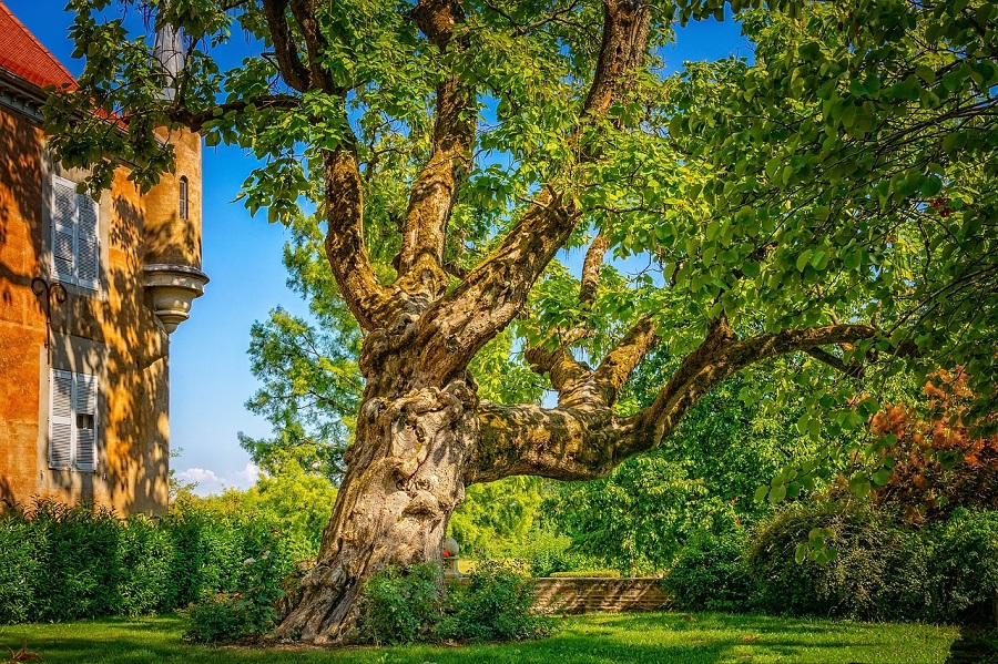 Whidbey Tree Care