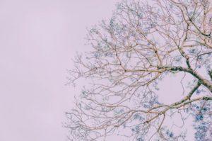 Gig Harbor Tree Care