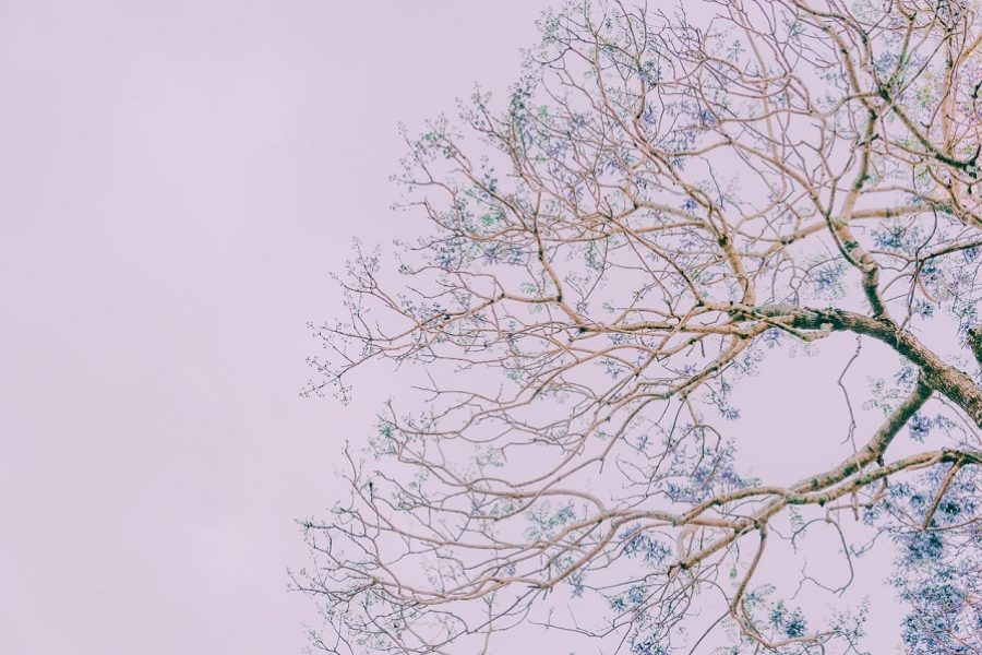 Gig Harbor Tree Care: Knowing When To Trim Your Trees