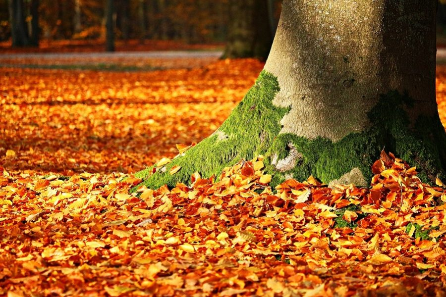 Autumn Whidbey Island Tree Care Tips