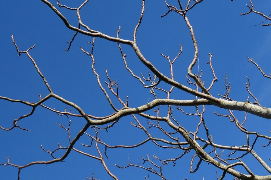 Pullman Tree Care For Overhanging Branches
