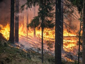 Fire risk abatement