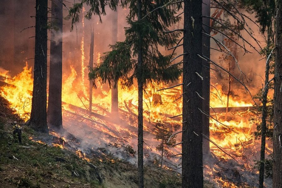 Creating A Defensible Space With Fire Risk Abatement