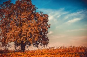 Pullman tree care