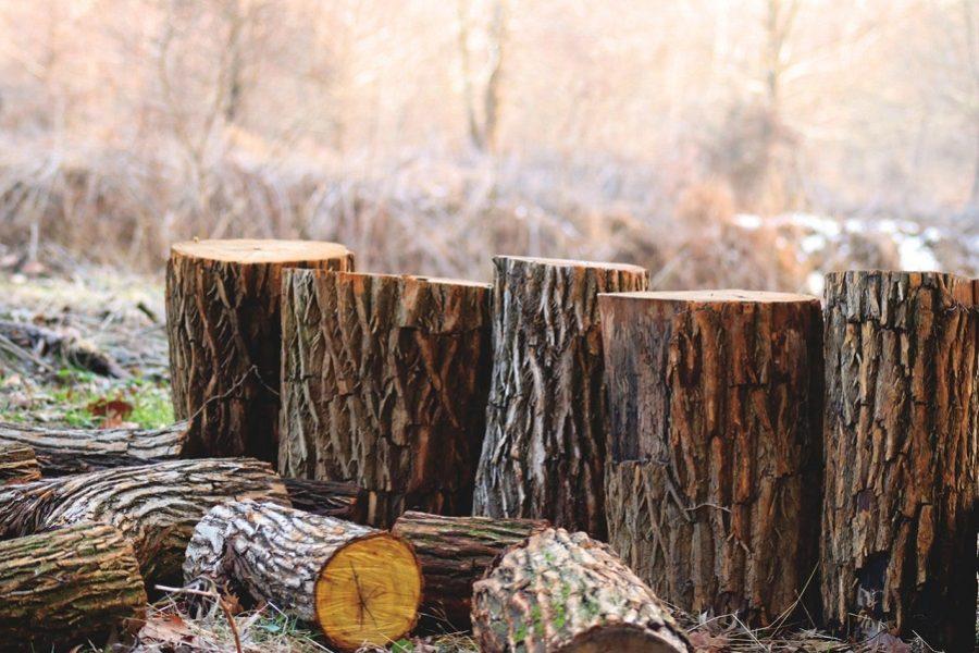 Professional Portland Tree Care Vs DIY Removal