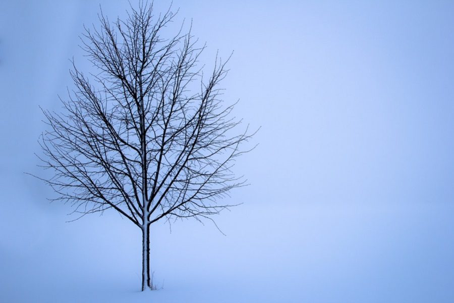 Why Winter Tree Pruning Is Important During The Dormant Season
