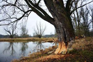 Pullman Tree Removal