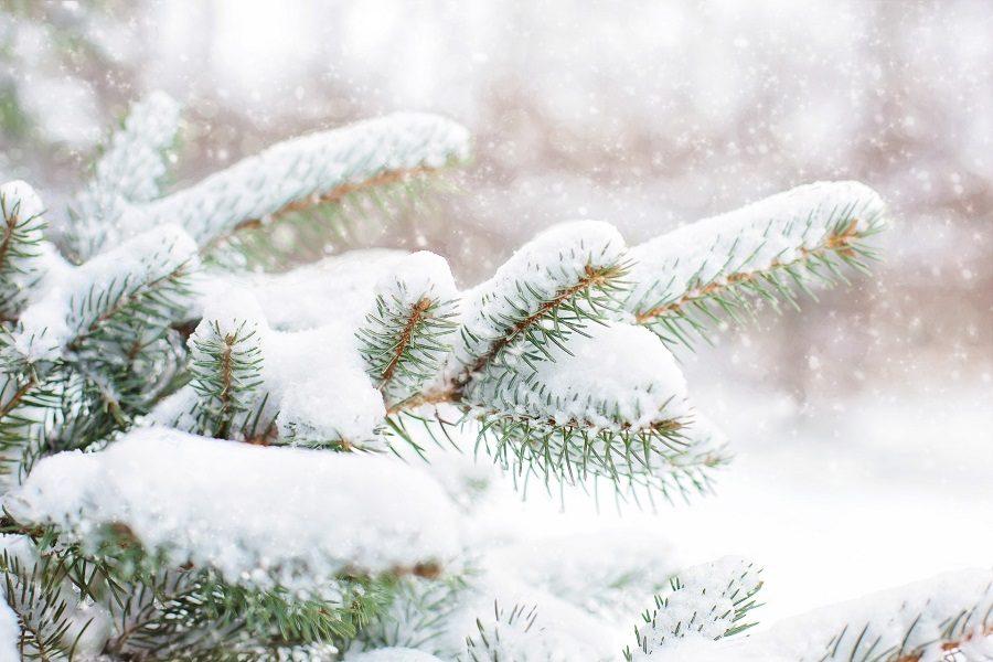 Portland Tree Care & Winter Damage