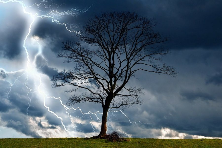 Salem Tree Care: Preventing Storm Damage