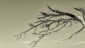 Salem Tree Care