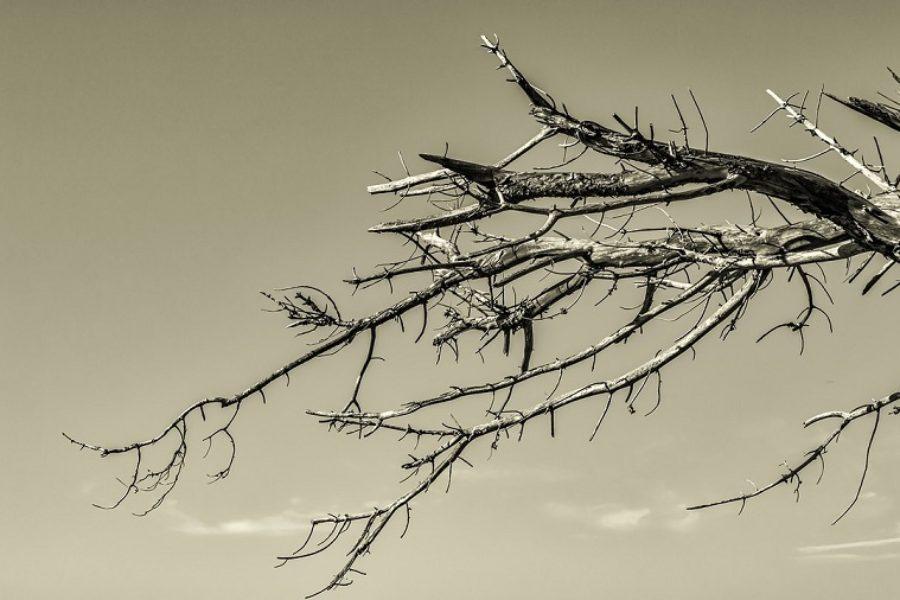 Salem Tree Care: Spotting A Hazardous Tree