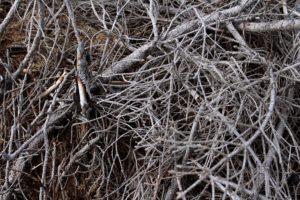 Portland Tree Trimming