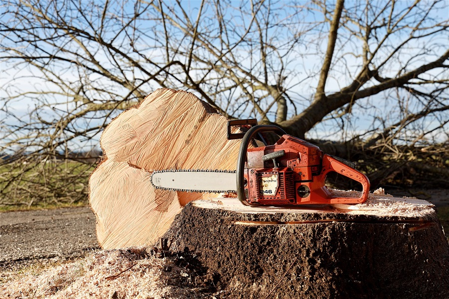 Corvallis Tree Care