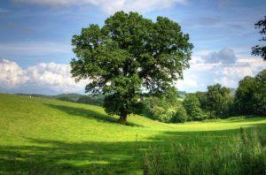 Salem Tree Trimming