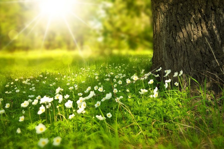 Salem Tree Care Tips For Spring