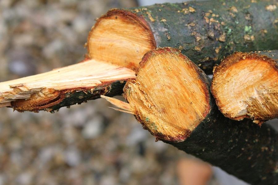 Eugene Tree Pruning