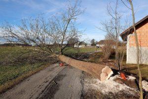 Corvallis Tree Removal Service