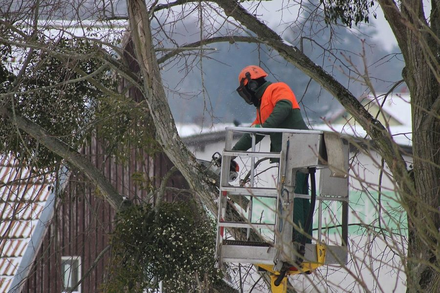 Reasons To Hire Westcoast Tree Care in Eugene, Oregon
