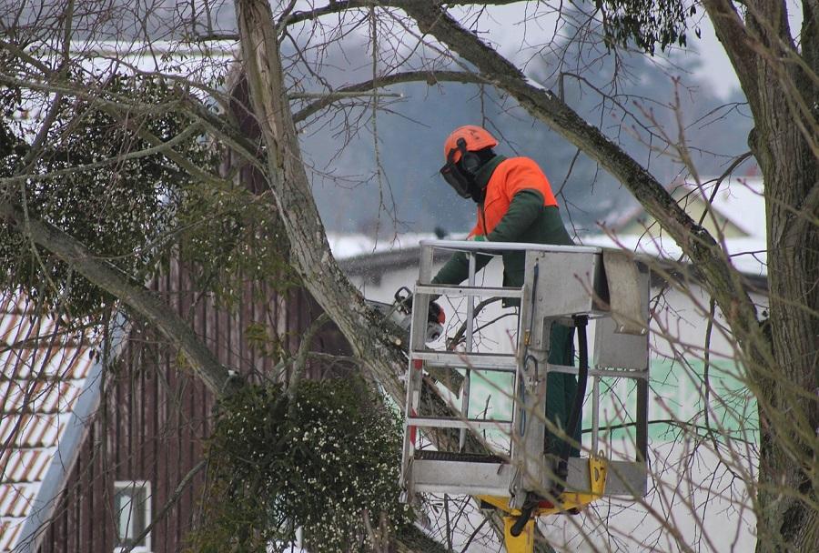 Tree Care in Eugene