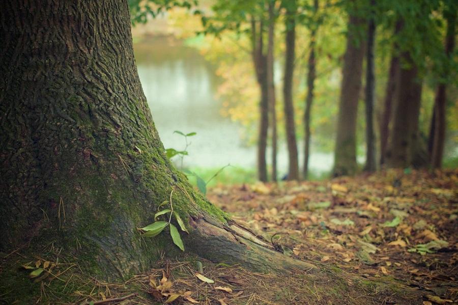 Olympia Tree Care