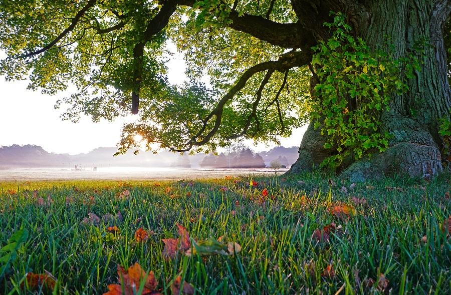 Maple Valley Arborist